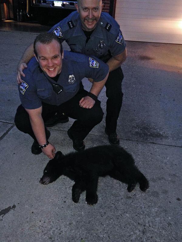 Medvementő rendőrök (Array)