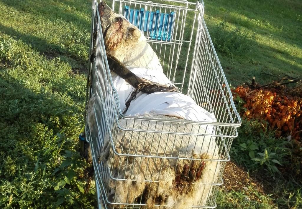 állatkínzás kispesten (Array)
