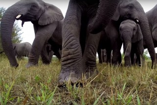 elefant-gopro(960x640).jpg (Array)