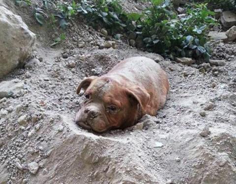 eltemetett kutya 1 (Array)