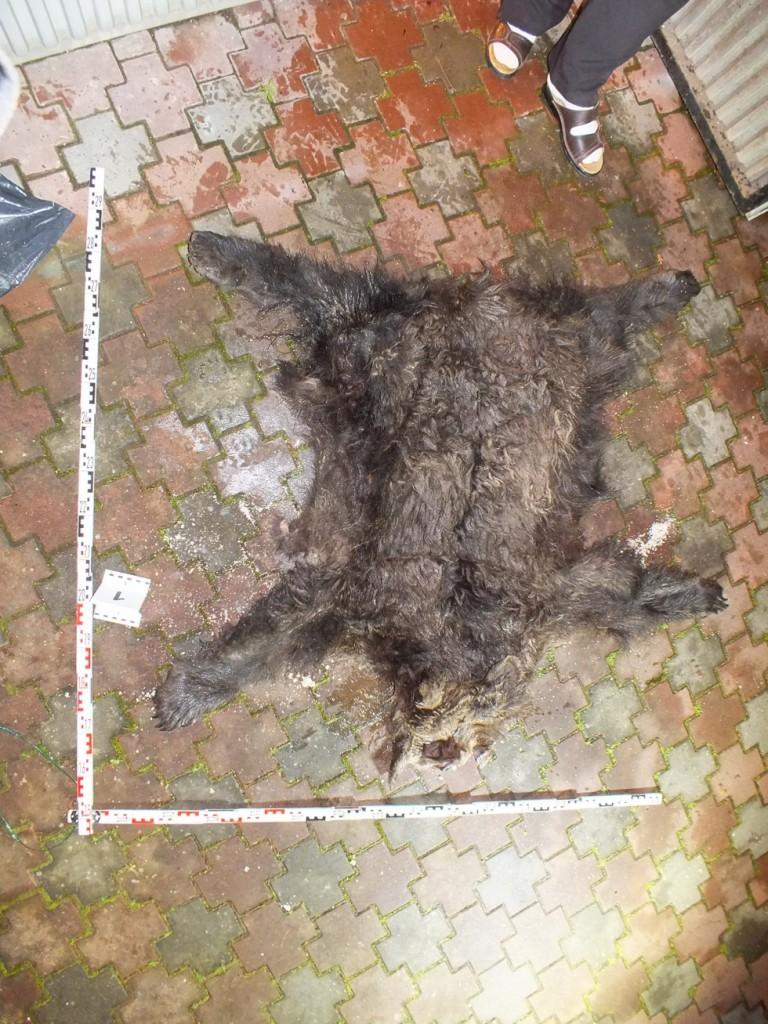 kilőtt medve (Array)