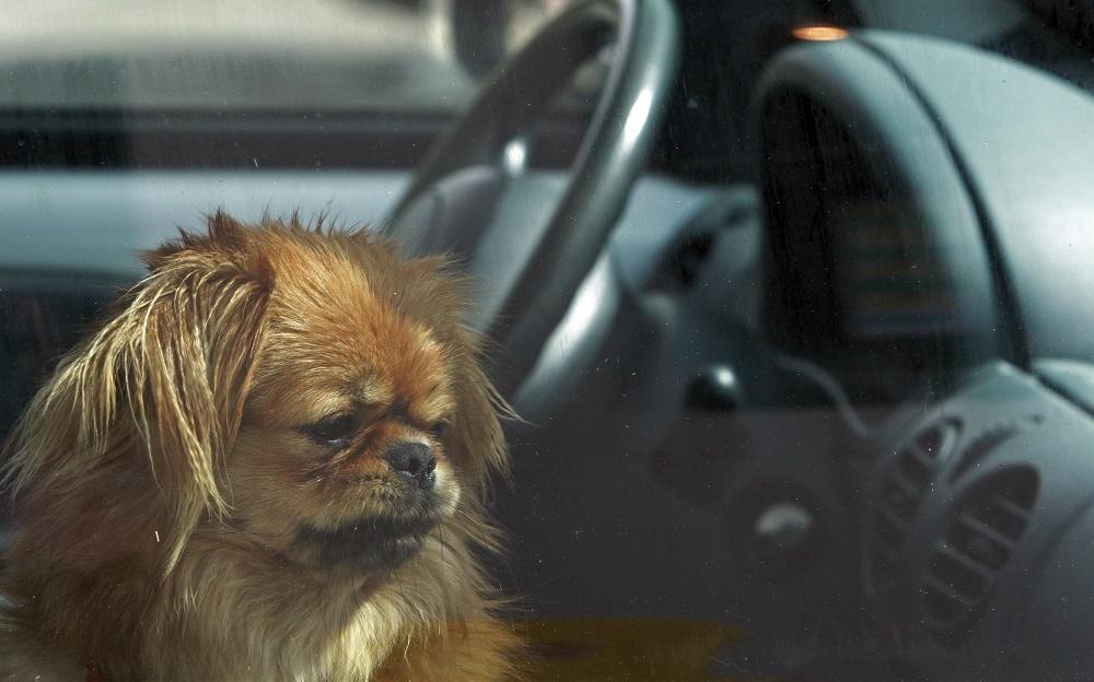 kutya autóban hagyva (Array)