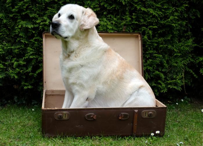 kutya (Array)