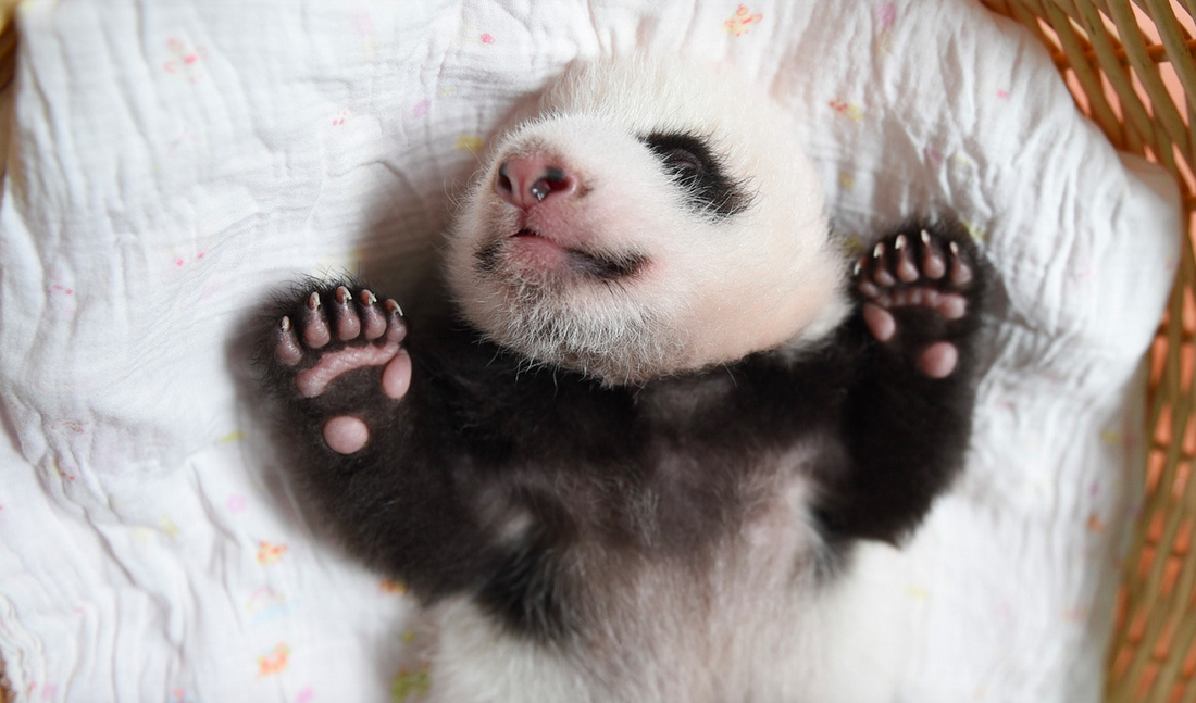 panda (Array)