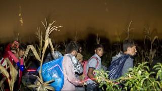 Röszke, 2015. szeptember 12.Migránsokat Röszke határában, miután több százan elindultak a gyűjtőpontról 2015. szeptember 12-én késő este. A tömeg egy ideig a síneken haladt, majd egy kukoricáson keresztül egy úthoz értek.MTI Fotó: Mohai Balázs