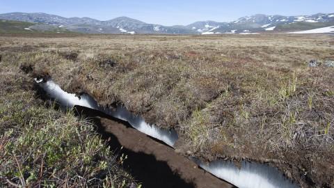 MAGADAN OBLAST Permafrost - Sibérie Russia .Sredniy PointBiosphoto / Samuel Blanc