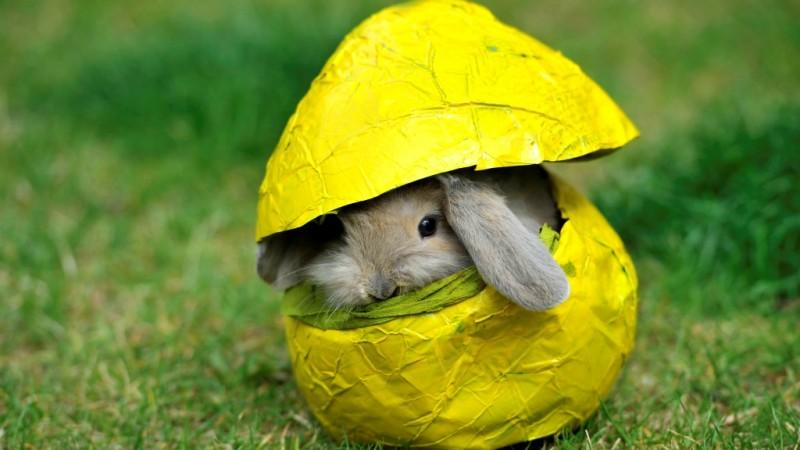 Húsvét - Állatvilág