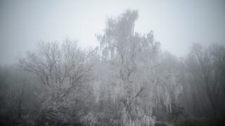 Salgótarján, 2014. november 28. Zúzmarás fák a Medves-fennsíkon, Salgótarján közelében 2014. november 28-án. MTI Fotó: Komka Péter