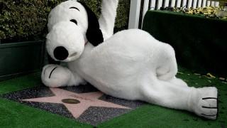 Hollywood, 2015. november 3.Snoopy kutyának öltözött résztvevő Snoopy csillagjának avatási ünnepségén a Hollywoodi hírességek sétányán, Hollywoodban 2015. november 2-án. Az előtérben Charles M. Shultz karikaturista, rajzfilmkészítő csillaga. (MTI/EPA/Mike Nelson)