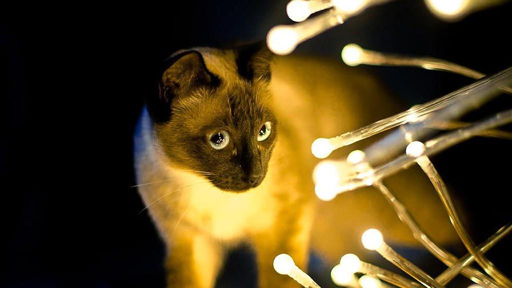 társkereső oldal cica
