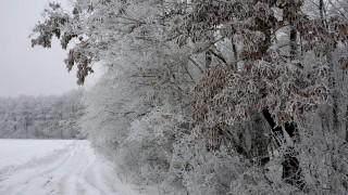 Acsa, 2010. február 9. Behavazott fák a Pilisi Parkerdõ Zrt. acsai erdészetében. MTI Fotó: Kovács Attila
