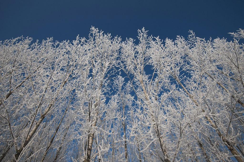 Hajdúszovát, 2016. január 23.Zúzmarás fák havazás után Hajdúszovát közelében 2016. január 23-án.MTI Fotó: Czeglédi Zsolt