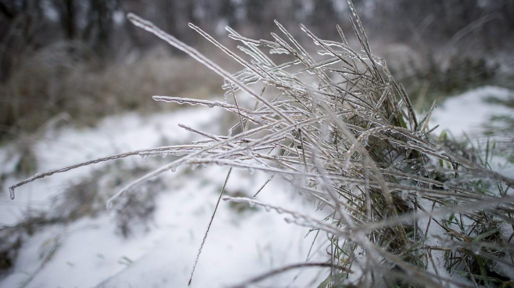Pécs, 2016. január 6. Növényre fagyott ónos esõ Pécsen 2016. január 6-án. MTI Fotó: Sóki Tamás