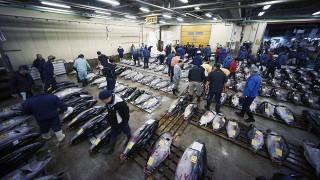 Tokió, 2016. január 5.Vásárlók felmérik a frisshalkínálatot a tokiói Cukidzsi nagybani halpiac ez évi első tonhalárverésén 2016. január 5-én. A 80 éves Cukidzsi, a világ legnagyobb és leghíresebb hal- és tengerigyümölcs-piaca novemberben elköltözik a Tokiói-öböl egyik délebben fekvő részére. (MTI/AP/Eugene Hoshiko)