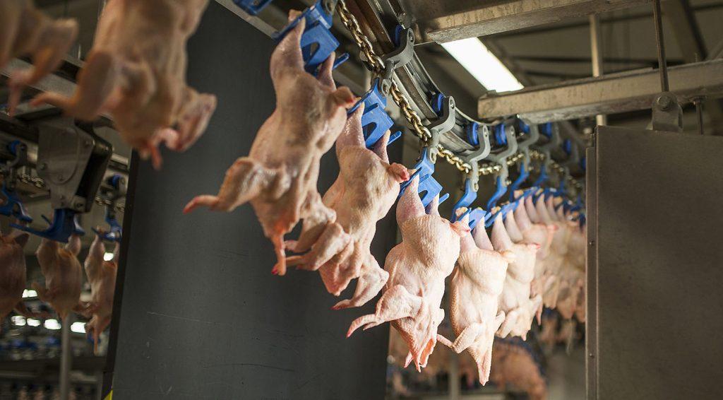 Kisvárda, 2014. július 3.Egész csirkék a gyártósoron a baromfitenyésztéssel, -vágással és -feldolgozással foglalkozó Master Good Cégcsoport 2,1 milliárd forintból megújított és bővítet kisvárdai üzemében 2014. július 3-án.MTI Fotó: Balázs Attila