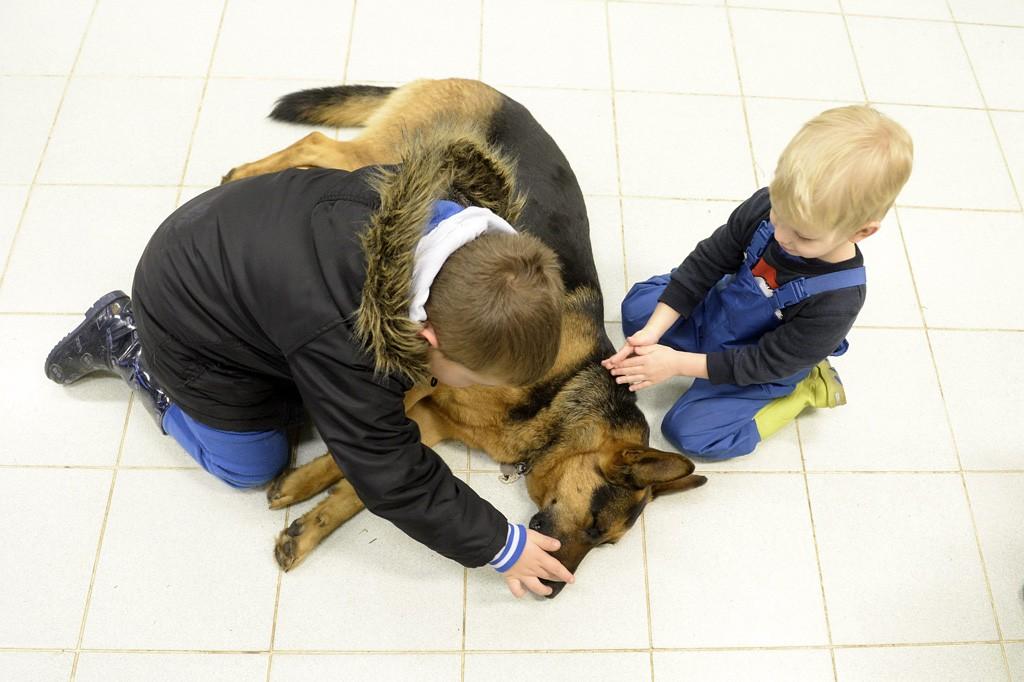 Budapest, 2016. február 10.Gyerekek játszanak Rexszel, Varga Károly gyermekorvos kutyájával az óbudai Ányos utcai gyermekorvosi rendelőben 2016. február 10-én. A terápiás minősítéssel rendelkező német juhász minden rendelésre elkíséri gazdáját, ahol neki is szerepe van, megnyugtatja a gyerekeket, leköti a figyelmüket.MTI Fotó: Kovács Tamás