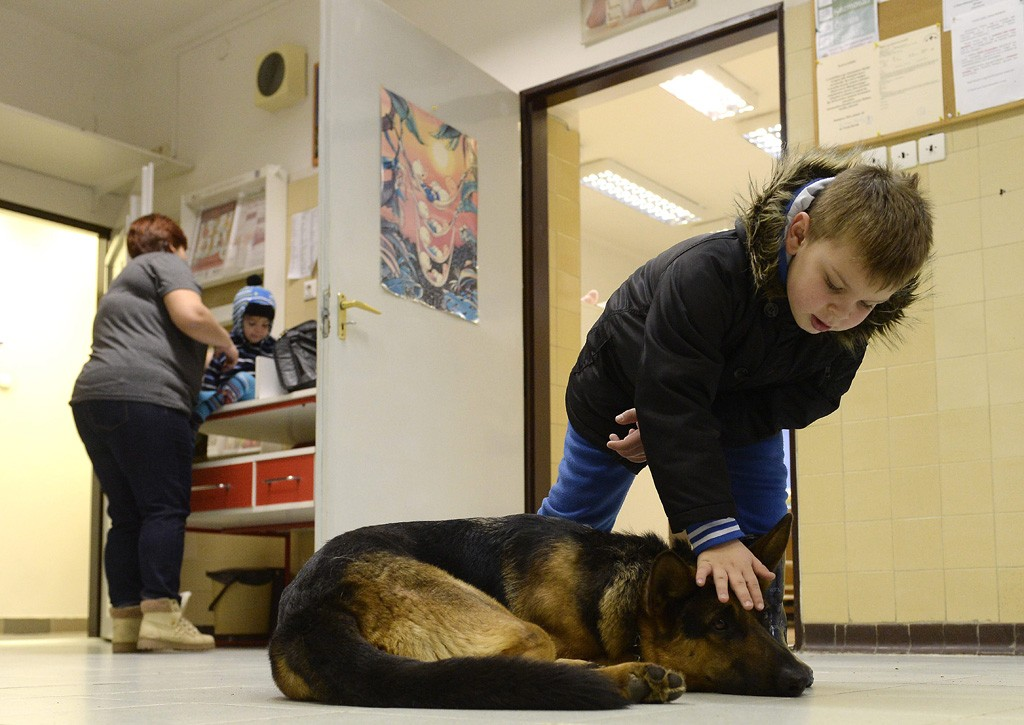 Budapest, 2016. február 10.Egy fiú játszik Rexszel, Varga Károly gyermekorvos kutyájával az óbudai Ányos utcai gyermekorvosi rendelőben 2016. február 10-én. A terápiás minősítéssel rendelkező német juhász minden rendelésre elkíséri gazdáját, ahol neki is szerepe van, megnyugtatja a gyerekeket, leköti a figyelmüket.MTI Fotó: Kovács Tamás