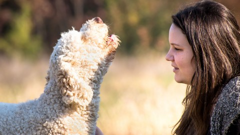 Singing dog and the girl