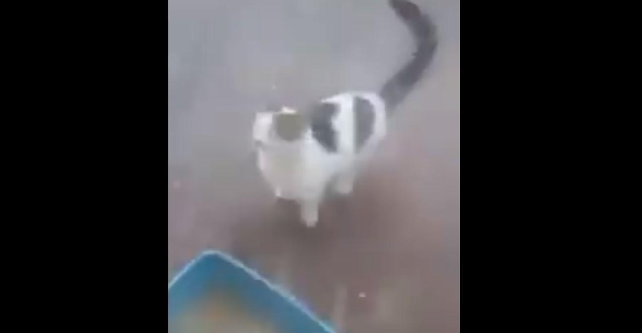 Macska szex videók
