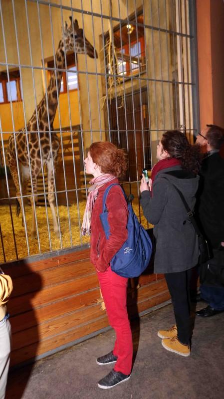 Zsiráf nézett le a látogatókra