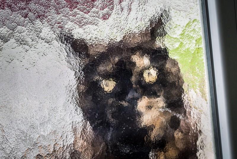 Frankfurt, 2014. november 3. Egy macska várja egy frankfurti lakás üvegajtaja mögül, hogy beengedjék 2014. november 3-án. (MTI/EPA/Frank Rumpenhorst)