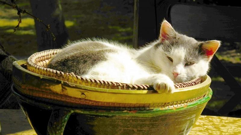 Zebegény, 2012. március 17. Egy macska napozik a Napraforgó utca egyik nyaralójának teraszán. MTVA/Bizományosi: Nagy Zoltán  *************************** Kedves Felhasználó! Az Ön által most kiválasztott fénykép nem képezi az MTI fotókiadásának, valamint az MTVA fotóarchívumának szerves részét. A kép tartalmáért és a szövegért a fotó készítõje vállalja a felelõsséget.
