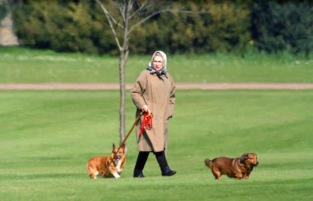WINDSOR,  UNITED KINGDOM - APRIL 2:   Queen Elizabeth II walking her dogs at Windsor Castle, on April 2, 1994 in Windsor, United Kingdom . (Photo by Julian Parker/UK Press via Getty Images)