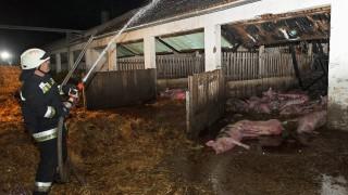 Lázi, 2016. április 19. Tûzoltó egy kigyulladt sertéstelepen a Gyõr-Moson Sopron megyei Láziban 2016. április 19-ére virradó éjjel. A tûzben több mint száz állat elpusztult. MTI Fotó: Krizsán Csaba