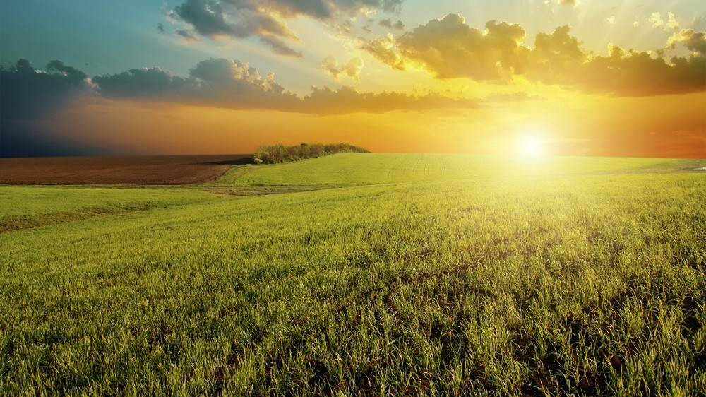 sunset and green field