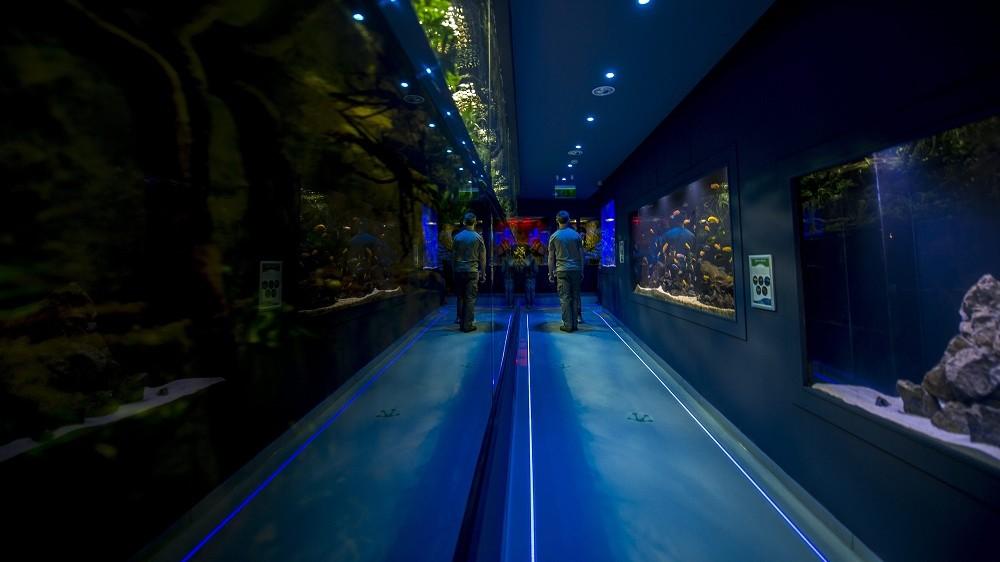 Pécs, 2016. május 20. Tengeri akvárium az 1,8 milliárd forintos beruházásból megújult pécsi állatkertben 2016. május 20-án. MTI Fotó: Sóki Tamás