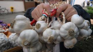 Makó, 2007. szeptember 7. Megnyílt a XVIII. Makói Hagymafesztivál, ahol a térség gazdálkodói tanácskoznak az ágazat problémáiról, bemutathatják termékeiket, illetve az odalátogatók vásárolhatnak a hagyományos makói hagyma minden fajtájából. MTI Fotó: Németh György