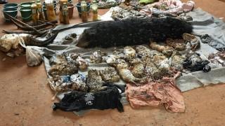 Szai Jok, 2016. június 1. Bomlófélben levõ állati tetemek a Kancsanaburi melletti erdõségben, Szai Jok körzetében lévõ buddhista Tigristemplomban 2016. június 1-jén. A Thaiföldi Nemzeti Park munkatársai negyven tigriskölyök tetemére bukkantak a két nappal korábban tartott razzia során. A thaiföldi vadvédelmi hatóság bezáratja a tigrisparkot, az ott élõ 137 nagymacskát pedig egy tenyésztési központba költöztetik, mert a szentélyt fenntartó szerzeteseket állatkínzással és illegális vadállat-kereskedéssel vádolják. (MTI/EPA)