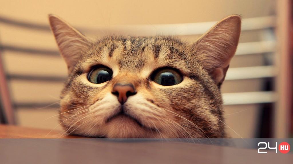 hogyan kezeljük a macskák pikkelysömörét vörös foltokkal borított malacok, mint kezelni