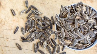 overthrown in a bowl full of sunflower seeds