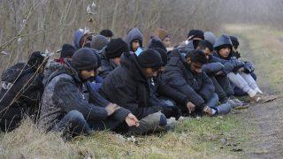 Röszke, 2016. február 9. Elfogott határsértõk Röszke térségében 2016. február 9-én. Ezen a napon 24, magát pakisztáni, indiai és nepáli állampolgárnak valló férfit fogtak el egy csoportban, miután a határzárat megrongálva illegálisan magyar területre léptek. MTI Fotó: Kelemen Zoltán Gergely
