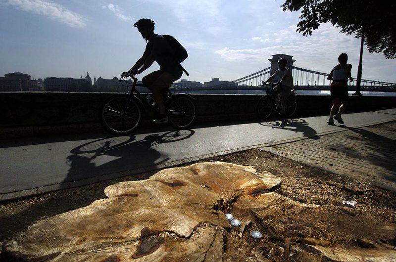 Budapest, 2006. augusztus 24.Mécsesek annak a fának a tuskóján, amely az augusztus 20-i tűzijáték idején tomboló szélviharban kidőlt, és két ember halálát okozta a Bem rakparton.MTI Fotó: Szigetváry Zsolt