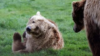 Állatvilág - Veresegyházi Állatkert és Medveotthon