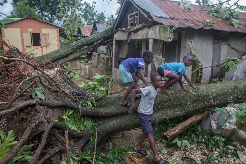 Leogane, 2016. október 6.Gyerekek másznak egy tőből kicsavart fa törzsén a Matthew névű trópusi vihar elvonulása után Leogane városban, Haitin 2016. október 6-án. Az elmúlt évtized egyik legerősebb hurrikánjaként számon tartott Matthew heves esőzésekkel és óránkénti 230 kilométeres széllökésekkel söpört végig Haitin, ahol a halálos áldozatok száma elérte a 136 főt. (MTI/EPA/Sean Rayford)