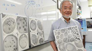 Jokohama, 2016. október 3. 2016 júliusában Jokohamában készített kép Ohszumi Josinori japán tudósról, aki 2016. október 3-án elnyerte az orvosi Nobel-díjat. (MTI/AP/Kyodo News/Macusita Akiko)