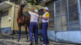 A race horse is washed at the stables inside the Champ de Mars Race Course in Port Louis, Mauritius, on October 8, 2016. As the horses round the last bend, the crowd starts shouting, their cries crescendoing into deafening cheers as the jockeys bear down on the finish line. In Mauritius, horse racing is a virtual religion and the Champ de Mars racecourse its temple. / AFP PHOTO / kirshna pather