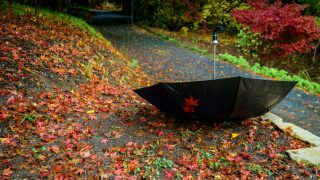 Unattended umbrella upside down in autumn park among fallen leaves