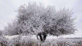 Salgótarján, 2016. december 19. Zúzmarával borított fa Salgótarján közelében 2016. december 19-én. MTI Fotó: Komka Péter