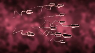 Natural insemination sperm and egg cell