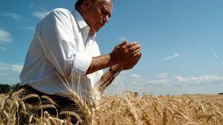 Farád, 2001. július 08.Többek között a kétéves költségvetés adta mezőgazdasági lehetőségekről, a föld védelméről, valamint a gazdatársadalom érdekeiért való határozottabb kormányzati kiállásról beszélt Torgyán József, a Független Kisgazdapárt elnöke a Farádon rendezett nosztalgiaaratáson. A föld védelméről szólva a politikus kijelentette, hogy pártja gátat fog vetni annak a törekvésnek, hogy a magyar föld idegen kézbe kerülhessen. Az aratókat a földeken Gyimóthy Géza, az Országgyűlés alelnöke, az FKGP országos főtitkára is köszöntötte. Itt felelevenítették az egykori aratási szokásokat, a kaszások megkóstolták az aratópálinkát, és kézi kaszákkal vágták rendre a búzát. A képen: Torgyán József gabonát szemez.MTI Fotó: Baranyai Edina