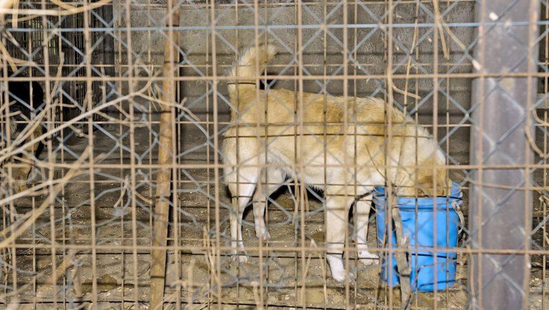 Kiskunlacháza, 2017. január 26. Egy kutya eszik Kiskunlacháza külterületén egy állatmenhelyen, ahol kigyulladt egy épület 2017. január 25-én este. Mintegy hatvan kutya bennégett a 200-300 négyzetméteres épületben keletkezett tûzben. Az állatmenhelyen a kutyákon kívül macskák is vannak. MTI Fotó: Lakatos Péter