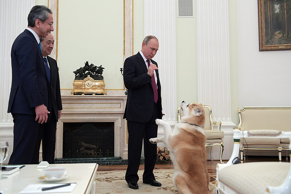 A picture taken on December 7, 2016 shows Russian President Vladimir Putin (R) as he plays with his Yume, an Akita dog prior to an interview with Nippon Television Network Corporation Executive Director Takayuki Kasuya (L) and Yomiuri Shimbun Editor in Chief Mizoguchi Takeshi in the run-up to his official visit to Japan.  / AFP PHOTO / SPUTNIK / Alexey DRUZHININ
