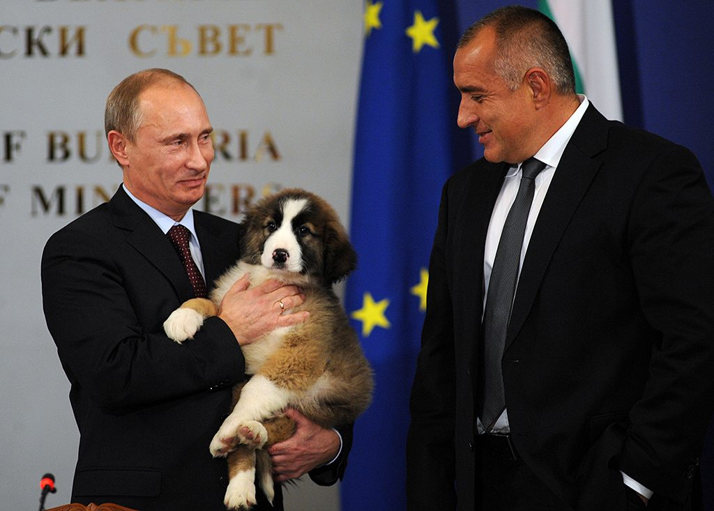 Russian Prime Minister Vladimir Putin holds on November 13, 2010 a Bulgarian shepherd dog he received from his Bulgarian counterpart Boyko Borisov (R) after their press conference in Sofia. Bulgaria's state energy holding BEH and Russian gas giant Gazprom set up on on November 13 a joint venture to build and operate the Bulgarian stretch of the South Stream gas pipeline from Russia to southern Europe. AFP PHOTO / NIKOLAY DOYCHINOV / AFP PHOTO / NIKOLAY DOYCHINOV