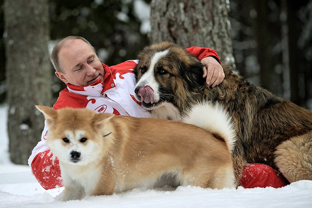 This photo taken on March 24, 2013 shows Russin President Vladimir Putin as he plays with his dogs 'Buffy' (up) and 'Yume' at his residence Novo-Ogariovo, outside Moscow. Bulgarian shepherd dog 'Buffy' was presented to Putin by his Bulgarian counterpart Boyko Borisov while Japanese Prime Minister Yoshihiko Noda offered Putin the puppy 'Yume' as a gift during the G20 in Mexico in June.  AFP PHOTO / /RIA NOVOSTI / PRESIDENTIAL PRESS SERVICE / ALEXEY DRUZHINYN / AFP PHOTO / RIA NOVOSTI / Alexsey Druginyn