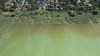Balatonmáriafürdő, 2013. július 21.Légi felvétel a Balatonban fürdőző emberekről Balatonmáriafürdő közelében 2013. július 21-én.MTI Fotó: Varga György
