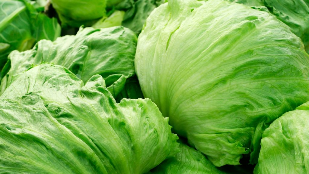 Iceberg lettuce on market place. Even soft lighting through a roof of a pavilion with some diffused backlight.